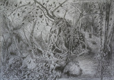 Wodi Wodi Plumtree Rock, pencil drawing, 66x92, $500