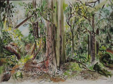 Wodi Wodi Rainforest 1, watercolour, 42x54, sold
