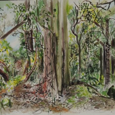 Wodi Wodi Rainforest 1, watercolour, 42x54, sold